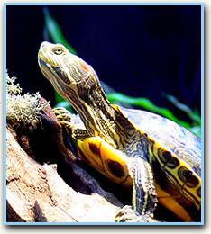 Turtle Premier Aquarium Service - Minneapolis, Minnesota