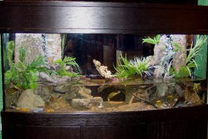 fall-home-and-garden-2003-turtle-tank-3