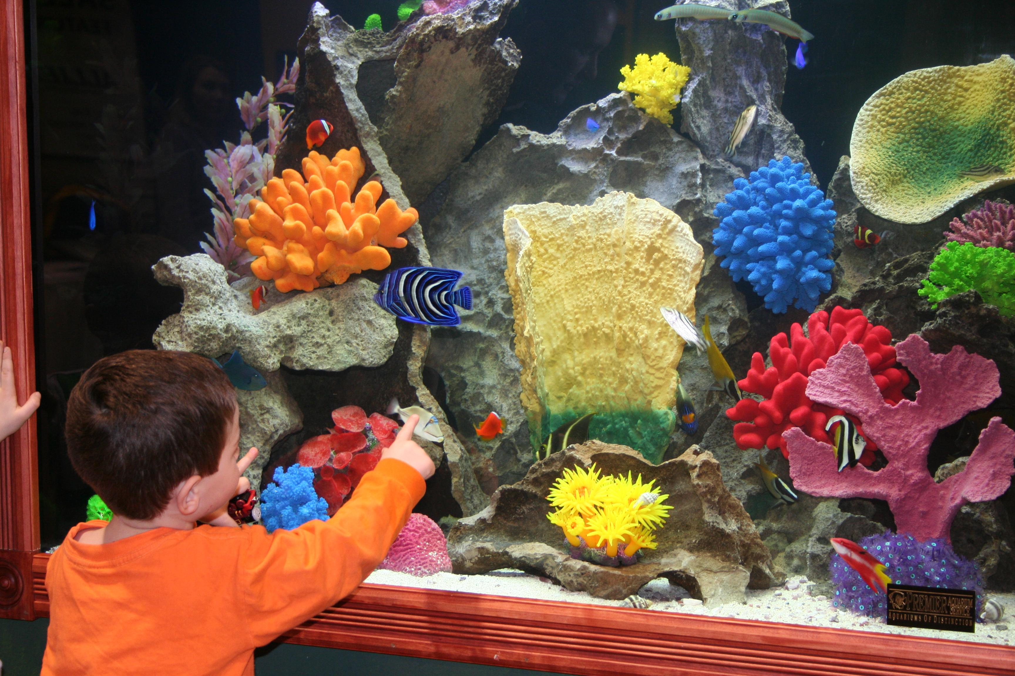 Premier Aquarium Service Fish Tank- Minneapolis, Minnesota
