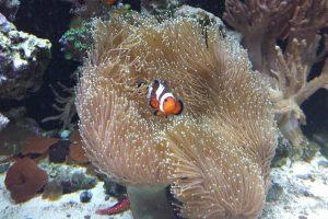 coral-reef-5