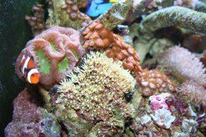 coral-reef-6