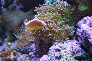 coral-reef1