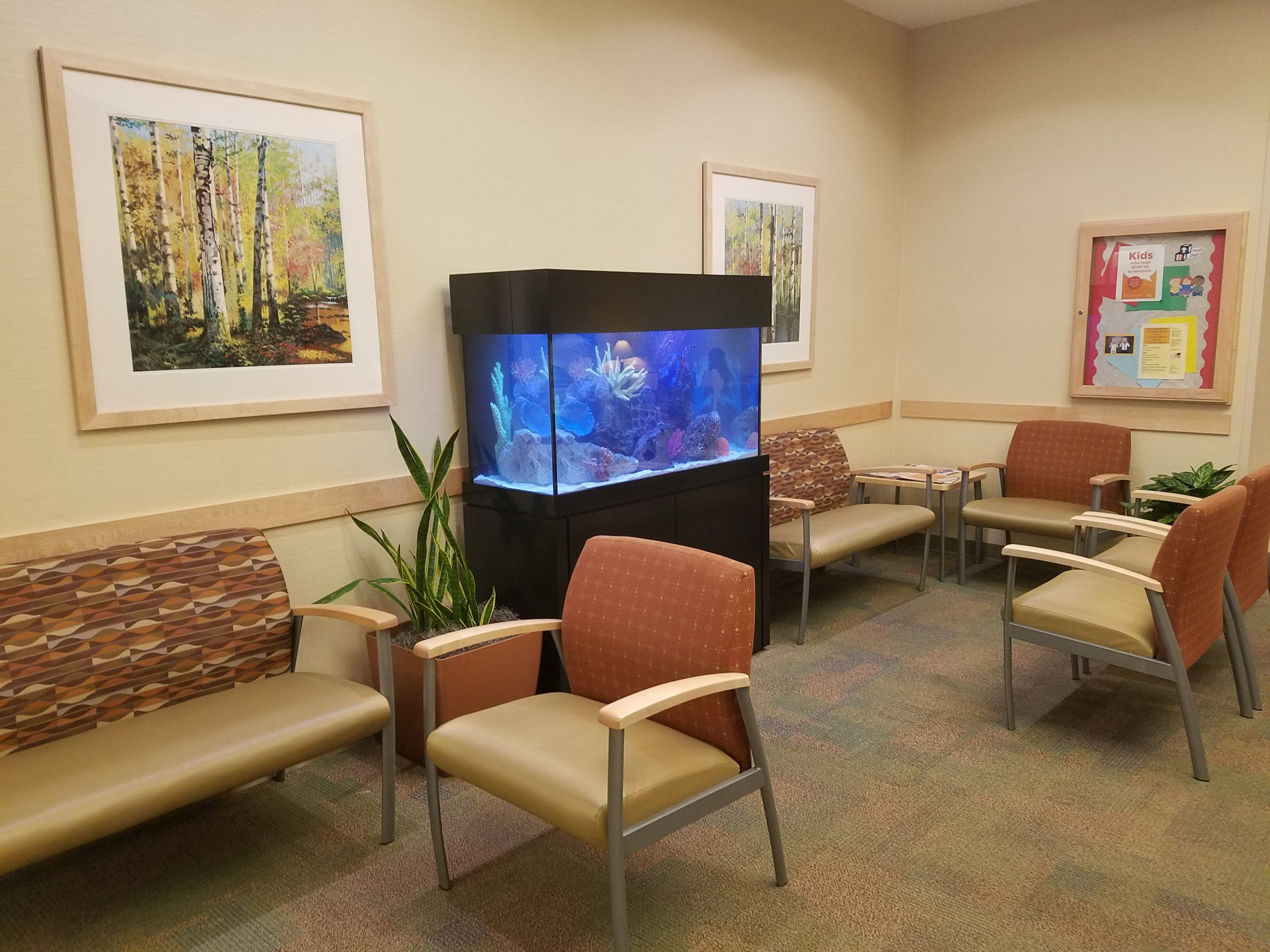 The Role of Aquariums in Overcoming Dental Phobia